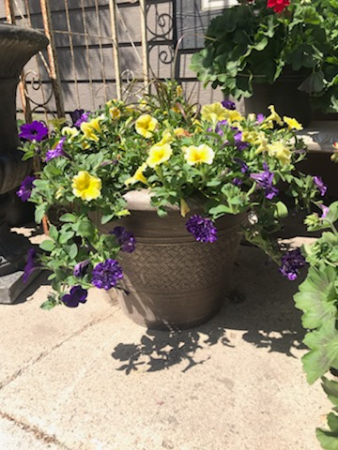 "20"" Annual Patio Pot Annual flowering plants"