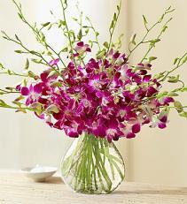20 Stem Orchid - Clear Vase Arrangement