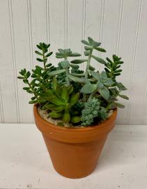 Succulents in Terra Cotta