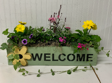 24 inch Annual Plant in Wooden Welcome Box