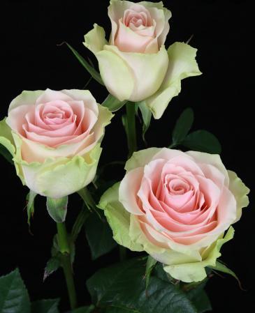 24 Pink Roses Rose Vase