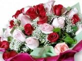 24 PREMIUM  ROSES
