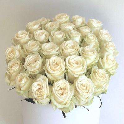 24 Romantic Wishes White Rose Box