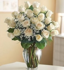 24 White Roses  PREMIUM LONG STEM ROSES