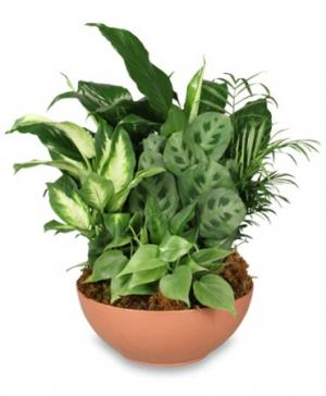 Gift of Green Dish Garden of Plants in Brandon, FL | WHIDDEN FLORIST