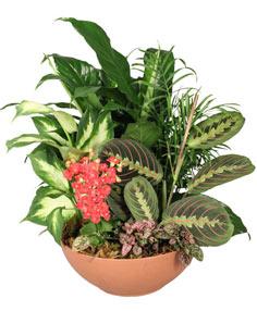 EUROPEAN DISH GARDEN Green & Blooming Plants