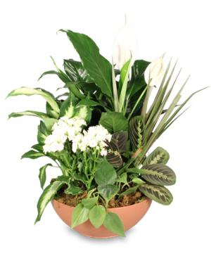 Blooming Dish Garden Green & Blooming Plants in Vicksburg, MS | Tina's Flowers & Gifts LLC