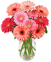 Dancing Daisies Arrangement