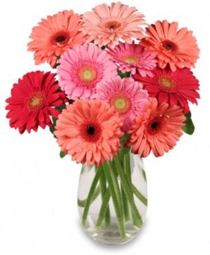 Dancing Daisies Arrangement in Vernon, NJ | HIGHLAND FLOWERS