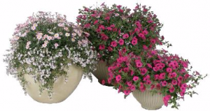 (3) Combo Pots Request Sun or Shade Pots in Granville, NY | The Florist at Mandy's Spring