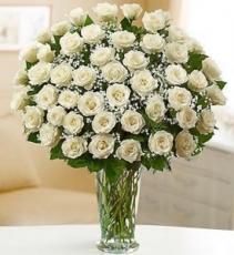 3 dozen white roses arrangement