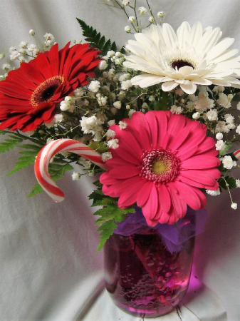 3 Large Gerbera Daisies arranged in a vase with Baby's Breath AND CANDY CANES!
