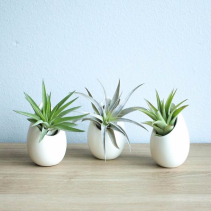 3 Mini Ceramic Vases Tillandsia Air Plants