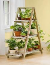 3 Month Plant Plan Flower Subscription