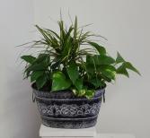 3 plants in black metal container Planter with  indoor plants