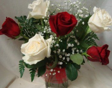 3 Red And 3 White Roses Arranged In A Cube Vase With Babys Breath