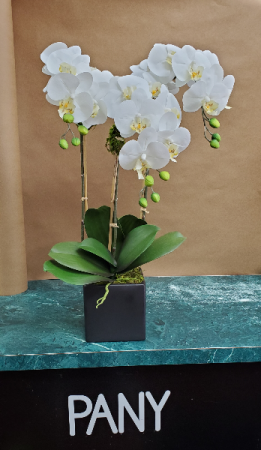 3 White Orchid Arrangements