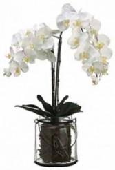 """30"""" Phalaenopsis Plant-SILK BOTANICAL"""