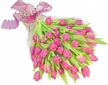 THIRTY PINK TULIPS  GIFT WRAP