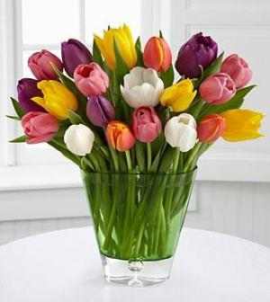 30 Tulips assorted   in Coconut Grove, FL | Luxury Flowers