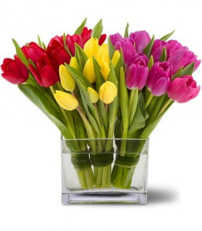30 Tulips Bundled In Rectangle Vase In Janesville Wi Floral Expressions