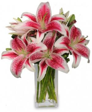 Luxurious Lilies Bouquet in Lebanon, NH | LEBANON GARDEN OF EDEN FLORAL SHOP