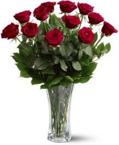 A Dozen Premium Roses Fresh Arrangement of Roses in Lauderhill, FL | A ROYAL BLOOM FLOWERS & GIFTS