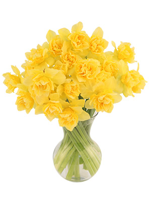 First Sign of Spring Daffodils Bouquet in Terre Haute, IN | BAESLER'S FLORAL MARKET