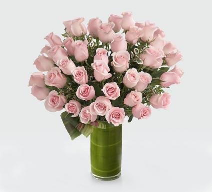 36 pink rose