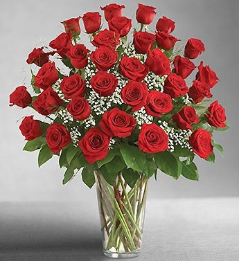 36 Red Roses Also Available in Pink, Hot Pink, Yellow, Orange, White & Lavender