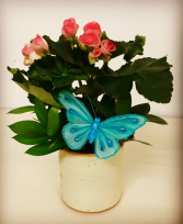 "4"" Blooming Pottery Plant.  Seasonal Blooming Plants"