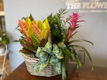 4 piece plant basket
