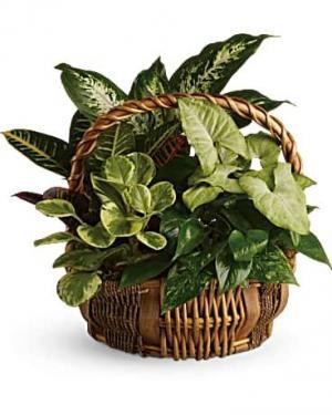 4 plant deluxe basket Woven Basket  Plant Container in Fairview, TN | Holman Florist