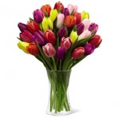 40 Assorted Tulips