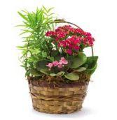 410B Plants