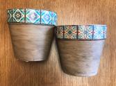 5 Inch Pots