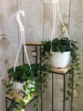 "5"" Sugar Vine Hanging Basket 5"" Sugar Vine Hanging Basket"