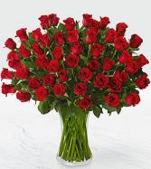 Fifty Stems Red Roses