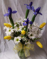"""Fresh as a Daisy"""" Daisies, iris and tulips  arranged in a vase (tulips may vary in color)"""