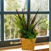 """6"""" Basket-Assorted Plants"""