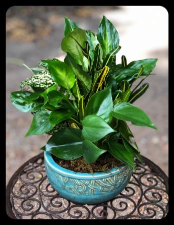 "6"" Ceramic Dish Garden"