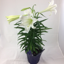 """6"""" Easter Lily in Foil"""
