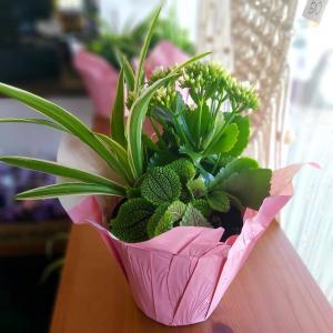 "6"" Euro Garden Everyday Day in Saskatoon, SK | QUINN & KIM'S FLOWERS"