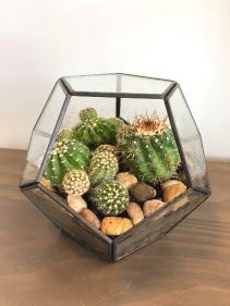 "6"" GEOMETRIC CACTUS TERRARIUM **LOCAL DELIVERY ONLY"""