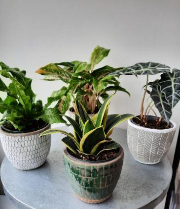 "6"" Green Plant"