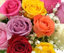 6 Mixed Colored Roses - No Vase  6 Roses