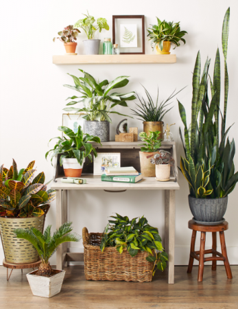 6 Month Plant Plan Flower Subscription