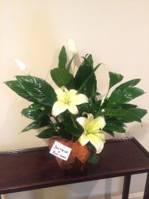 """6"""" Peace Lily in Fleur de Lis Copper Pot Green Plant"""
