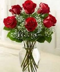 6 Stems Red Love's Embrace Roses Item #161774