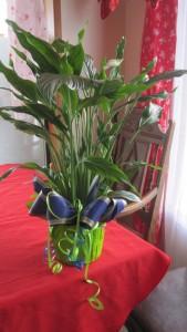 6in green plant asst 12 man colors  in Renton, WA | Alicia's Wonderland II